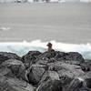 1264 - Detaille Island - 2011-02-21 - P1060945