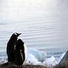 0480 - Neko Harbour - 2011-02-20 - P1060074
