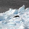 0576 - Neko Harbour - 2011-02-20 - P1060104