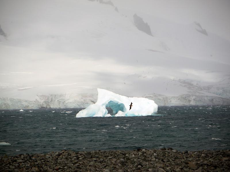 0234 - Half Moon Island - 2011-02-19 - P1050709