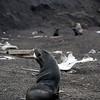 1626 - Deception Island - 2011-02-23 - P1070362