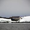 1374 - Detaille Island - 2011-02-21 - P1070139