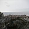 0269 - Half Moon Island - 2011-02-19 - P1050757