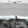 1263 - Detaille Island - 2011-02-21 - P1060943