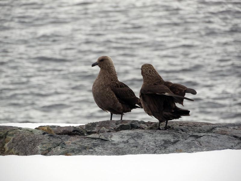 1269 - Detaille Island - 2011-02-21 - P1060955