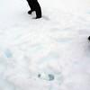 1239 - Detaille Island - 2011-02-21 - P1060859
