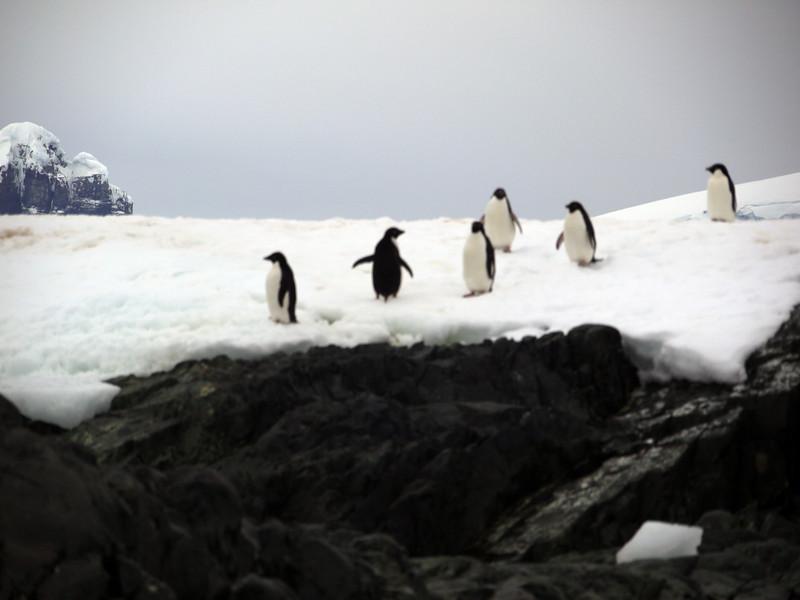 1307 - Detaille Island - 2011-02-21 - P1070002