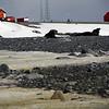 0169 - Half Moon Island - 2011-02-19 - P1050676
