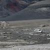 1666 - Deception Island - 2011-02-23 - P1070428