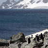 0258 - Half Moon Island - 2011-02-19 - P1050743