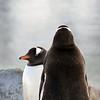 0511 - Neko Harbour - 2011-02-20 - P1060079