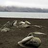 1689 - Deception Island - 2011-02-23 - P1070467