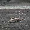 1583 - Deception Island - 2011-02-23 - P1070274
