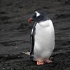 1675 - Deception Island - 2011-02-23 - P1070447