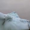 1384 - Detaille Island - 2011-02-21 - P1070162