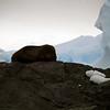 1330 - Detaille Island - 2011-02-21 - P1070054