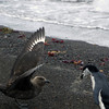 1618 - Deception Island - 2011-02-23 - P1070328
