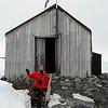1202 - Detaille Island - 2011-02-21 - P1010697