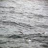 0325 - At Sea - 2011-02-19 - P1050828