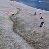 0689 - Cuverville Island - 2011-02-20 - P1060214