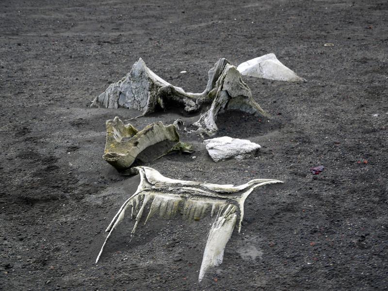 1589 - Deception Island - 2011-02-23 - P1070281