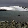 0288 - Half Moon Island - 2011-02-19 - P1050727