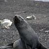 1630 - Deception Island - 2011-02-23 - P1070372