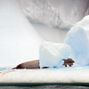 1444 - Penola Strait-Booth Island - 2011-02-22 - P1010772