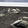1688 - Deception Island - 2011-02-23 - P1070466