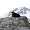 1266 - Detaille Island - 2011-02-21 - P1060949