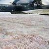 0688 - Cuverville Island - 2011-02-20 - P1060207