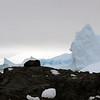 1328 - Detaille Island - 2011-02-21 - P1070051