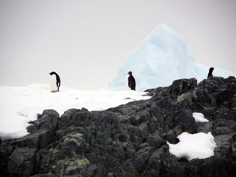 1310 - Detaille Island - 2011-02-21 - P1070009