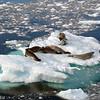 0371 - Neko Harbour - 2011-02-20 - P1010641