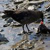 0719 - Cuverville Island - 2011-02-20 - P1060248