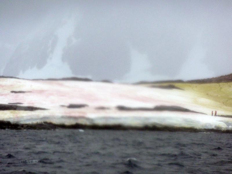 1494 - Penola Strait-Booth Island - 2011-02-22 - P1010837