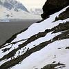 1261 - Detaille Island - 2011-02-21 - P1060934