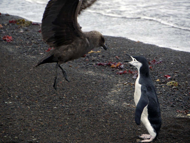 1617 - Deception Island - 2011-02-23 - P1070327
