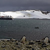 0287 - Half Moon Island - 2011-02-19 - P1050726