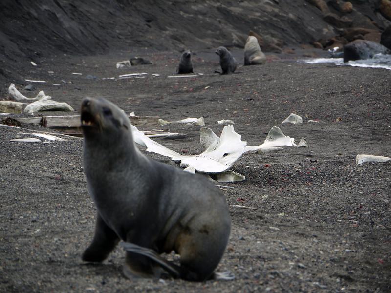 1627 - Deception Island - 2011-02-23 - P1070363