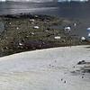 0693 - Cuverville Island - 2011-02-20 - P1060227