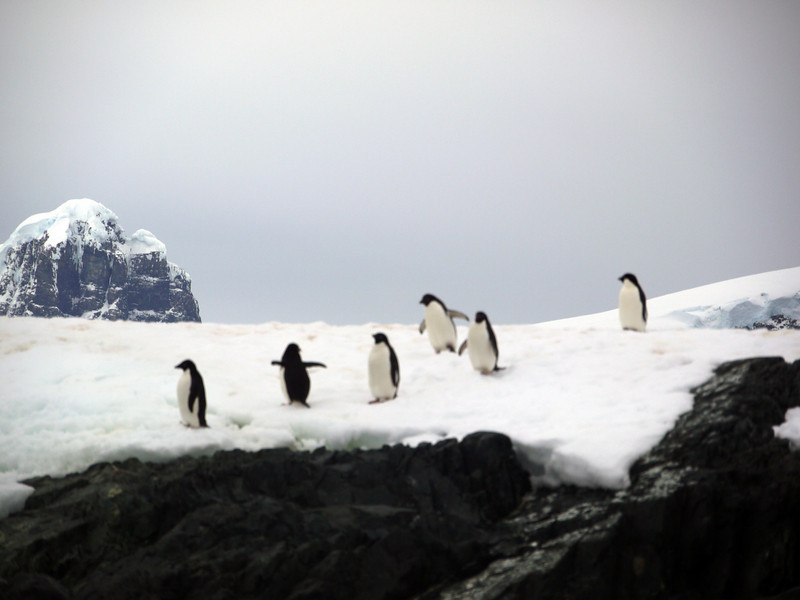 1304 - Detaille Island - 2011-02-21 - P1060996