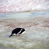 0163 - Half Moon Island - 2011-02-19 - P1050660
