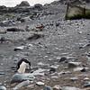 0277 - Half Moon Island - 2011-02-19 - P1050768