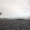 1497 - Gerlache Strait - 2011-02-22 - P1010847