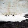 1321 - Detaille Island - 2011-02-21 - P1070040