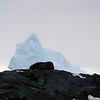 1331 - Detaille Island - 2011-02-21 - P1070058