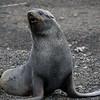 1634 - Deception Island - 2011-02-23 - P1070378