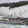 0477 - Neko Harbour - 2011-02-20 - P1050897