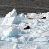 0578 - Neko Harbour - 2011-02-20 - P1060106
